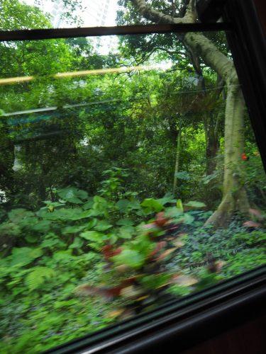 香港 ピークトラム車内