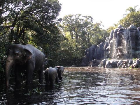 ジャングルクルーズ:ワイルドライフ・エクスペディション_水浴びする象